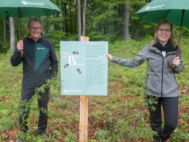 Wie Profit und Artenvielfalt in den Wäldern Hand in Hand gehen